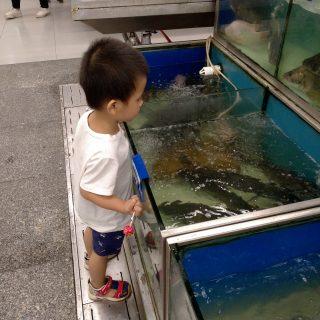 每次去超市能看半小时的 – 鱼-