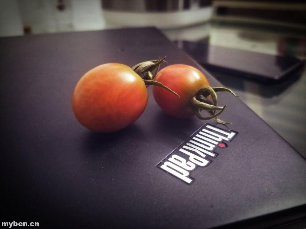 无心种番茄茄熟了- 1